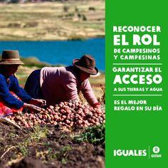 Celebremos hoy a campesinos y campesinas del Perú con la implementación del Plan de Agricultura Familiar, considerando a la mujer rural.