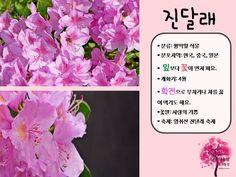 봄 활동자료 봄에 피는 꽃 PPT : 네이버 블로그 Diy Crafts, Flowers, Blog, Make Your Own, Blogging, Homemade, Craft, Royal Icing Flowers, Flower