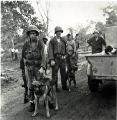 Chips the most decorated war dog of WWII. He broke free from his handler & attacked the Italian machine gunners forcing them out and leading to their surrender saving the marines on the beach.