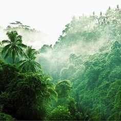 The rain forest? Or the Jungle? Maybe this is just a forest. Beautiful World, Beautiful Places, Tropical Forest, Amazon Rainforest, Mother Nature, Nature Photography, Photography Tips, Travel Photography, Wedding Photography