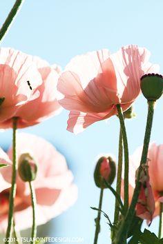 ©tslapointedesign_poppies14_1  http://www.tslapointedesign.com/notebook/