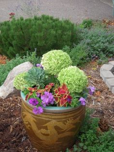 hydrangea heads add a twist to a container of kale, coleus and petunias.  They fade gracefully into the fall season.