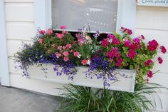 How to Plant and Maintain a Window Box - Home and Garden DigestHome and Garden Digest