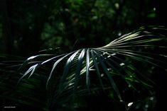 Plant Leaves, Explore, Plants, Photos, Flora, Plant, Exploring