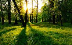 Green area in the woods - beautiful nature landscape - HD Desktop/Mobile Wallpaper Tree Wallpaper, Scenery Wallpaper, Nature Wallpaper, Mobile Wallpaper, Computer Wallpaper, Sunrise Wallpaper, Mountain Wallpaper, Forest Wallpaper, Thank You Jesus