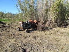 Tractor Ebro con ruedas de fangechar..restos del cultivo de arroz en la marjal dels Moros