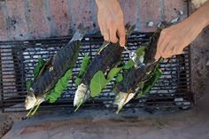 Grilled Sea Bass Wrapped in Fig Leaves (Lavraki Stin Schara) - In this preparation, fig leaves perfume and protect the flesh of the fish. Serve with lemon–olive oil sauce.