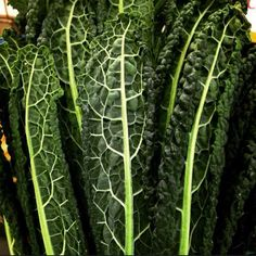 Cavalo Nero also known as black cabbage is now being grown in Berkshire England!