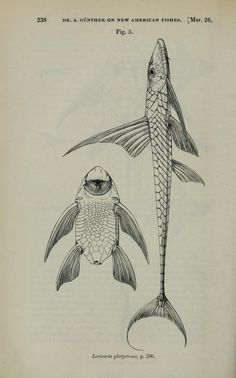 1868 - Proceedings of the Zoological Society of London. - Biodiversity Heritage Library