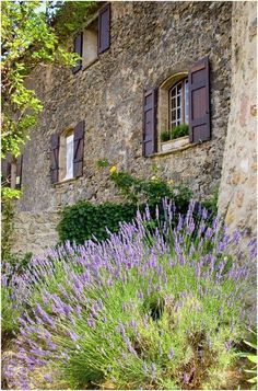 French cottage and lavender