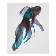 Extravaganter Goldfish Poster