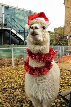 Girls 4-16 SO® Christmas Pajama Set | Llamas & Alpacas | Pinterest ...