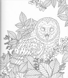harmony of nature adult coloring book pg 16 - Colour In Stencils