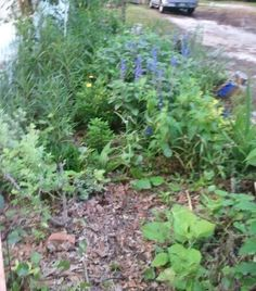 Front bed 6 - In the Gardens Today - 6-13-2013