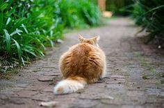 Cat, Outdoor, Terrace, Garde, Animal