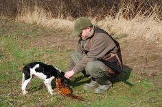 4 months old brittany's first pheasant.