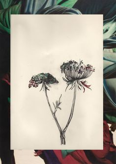 Dry Point flower Flower Drawings, Art Drawings, Sea Holly, Printmaking Ideas, Pen And Wash, Lino Cuts, Art Tips, Graphite, Amazing Art