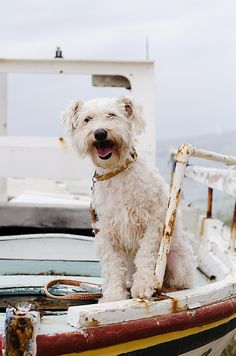 Hey, are you leaving me here? After I helped bark away all the bad waves so we could get here quick? Not Fair!........................