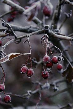 Modern Country: Vakkert frostkledd landskap - beautiful frosty landscape