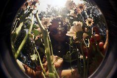 Margaritas - Acid Garden / Lima // lomography - fisheye camera on Flickr.  by dandovueltas    #photography #lomography #fisheye #film #35mm #girl #flowers #garden #Dasies #sun #sunglasses
