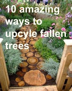 amazing ways to upcycle fallen trees--now if I only had a fallen tree. . .