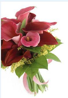 Favorite Flower: Calla Lillies