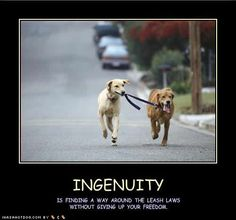 Quote Funny Dog Clip Art