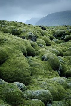 """Iceland ~ Hundreds of years of mist have covered the Eldhraun lava and tephra flow from the Laki fissure, East rift, in spongy moss and lichen. Formed in the massive """"Laki fires"""" that killed 1/4 of Iceland's people 1783-1784 AD."""