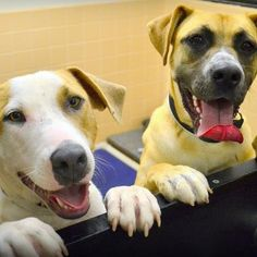 Here is a picture of Doodle and Piper who are both up for adoption at the Santa Fe Animal Shelter & Humane Society. Be a hero - adopt!  http://www.facebook.com/pages/CHACO-Dog-Training-Behavior-Consulting-LLC/106862209336142
