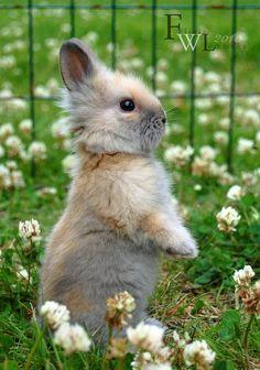 Baby bunny - ©Felicia W. Lemmeke (felill) via deviantART