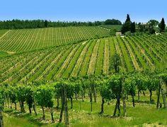 http://www.oilwineitaly.com #Inastagood #Landscape #Like #ilovevino #Love #Loveit #Lunch #Instavinho #Instawine #Igerswine #Gastrovictim #Gastronom #Gastroporn #Awesome #Pornwine #Redwine #Vin #Vineyard #Vino #Wein #Whitewine #Wine #Wineandfoodfest #Wineandfriends #Winelover #Winelovers #Wineporn #Winery #Winestagram www.oilwineitaly.com