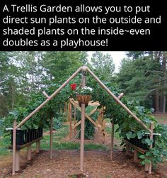 Trellis gardening, direct sun plants on outside, shaded plants on the inside --even doubles as a playhouse! PVC Cucumber Trellis I can see using this for many garden plants and gourds Vine Trellis, Garden Trellis, Trellis Ideas, Tomato Trellis, Sun Plants, Shade Plants, Potted Plants, Farm Gardens, Outdoor Gardens