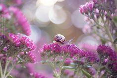 Snails garden by Megan , via 500px