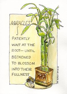 Thoughts on Miracles