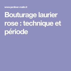 Bouturage laurier rose : technique et période