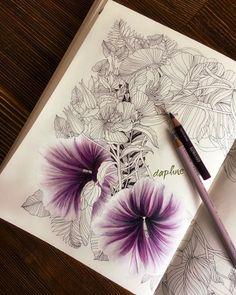 Daphne (@daphnesgallery) colouring book
