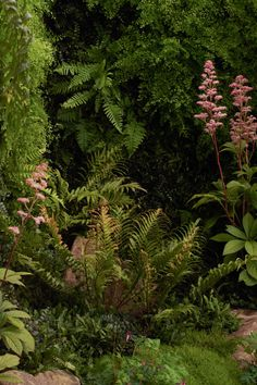 Xanthe has exhibited twice at the RHS Chelsea Flower Show in London, once in 2006 and again in Steep Gardens, Small Gardens, Coastal Gardens, Garden Ideas Nz, Garden Inspiration, Garden Landscape Design, Garden Landscaping, Garden Privacy, Landscaping Design