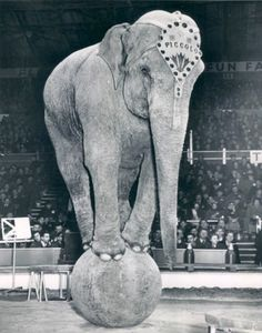 Piccolo the Elephant, Bertram Mills Circus, 1951, London Vintage Circus