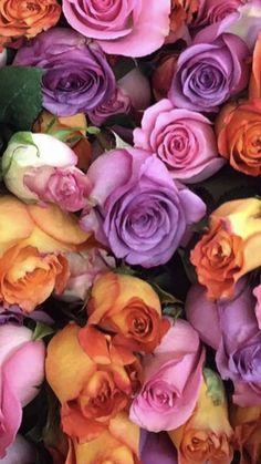 Beautiful Flowers Garden, Beautiful Roses, Pretty Flowers, Floral Wedding, Wedding Flowers, Bulk Flowers Online, Wholesale Roses, Organic Roses, Luxury Flowers
