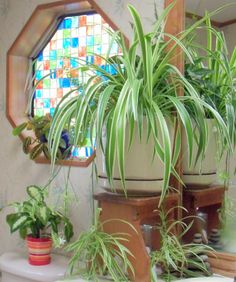 Buy a new house plant. For a greener home, read 10 Eco-friendly ways to green your home and family.