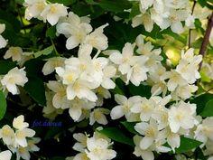 Moje Małe Czarowanie: Suszymy zioła, kwiaty, liście cz. 2