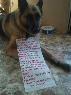 The best of dog shaming. these shouldnt make me laugh this hard lol Funny Animal Pictures, Cute Funny Animals, Dog Pictures, Funny Dogs, Animal Pics, I Love Dogs, Puppy Love, Cute Dogs, Dog Shaming Pictures