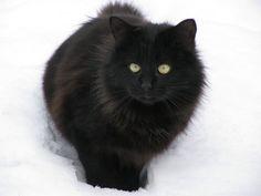 Snow Yoko 1 by Sanae78.deviantart.com on @deviantART