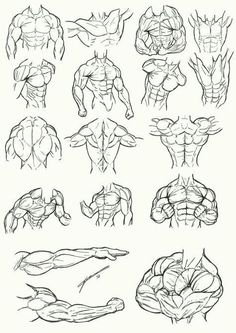 Human Anatomy Drawing, Drawing Body Poses, Body Reference Drawing, Human Figure Drawing, Art Reference Poses, Anatomy Sketches, Drawing Sketches, Art Drawings, Sketches Tutorial
