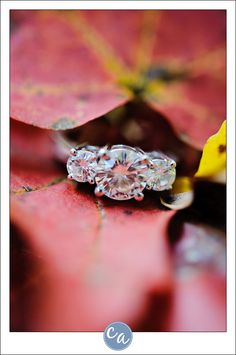BIG engagement ring nestled in leaves. (Seriously - who would dare nestle that in the leaves?)