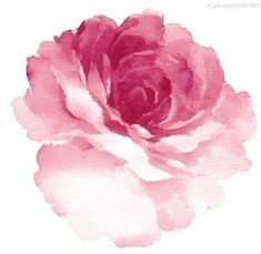Image result for contemporary rose painting