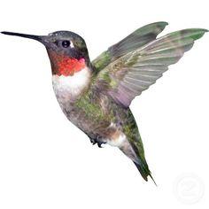 bird artwork - Hummingbird Christmas Ornament Zazzle com Hummingbird Drawing, Hummingbird Pictures, Watercolor Hummingbird, Hummingbird Tattoo, Watercolor Bird, Hummingbird Wallpaper, Hummingbird Colors, Hummingbird Illustration, Humming Bird Feeders