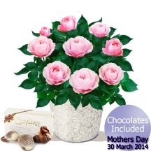 Mother's Day Flowers  - Pink Rose Bush & Chocolates Gifts Delivered, Mothers Day Flowers, Flowers Delivered, Rose Bush, Chocolates, Floral Arrangements, Floral Wreath, Bouquet, Wreaths