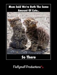 All cats are cuties.... - What more to say other than we just LOVE cool stuff!