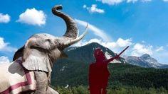 [Savoie] Val Cenis : Sur les traces d'Hannibal Au départ de Lanslevillard on prend les télésièges qui montent sur Côte plane (alternativement on peut prendre la route pour arriver au col du Mont Cenis). On descends ensuite par les chemins pour rejoindre la route qui monte au col du petit Mont Cenis en passant par le nord ouest du Lac : route de montagne légèrement montante qui nous enmène dans des alpages magnifiques.  Arrivé aux Coulours on quitte la piste pour prendre dans le champ à…
